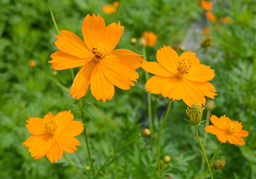 花写真 のコピー